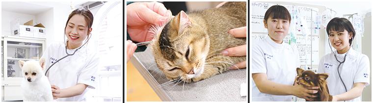 KSBにはペットサロンと同じように毎日さまざまな種類のワンちゃんやネコちゃんがやってきます。