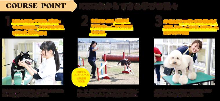 動物看護と同時に犬の訓練技法も習得でる!訓練所での校外授業も充実!トリミングの授業もある!